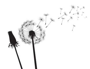 Black silhouette Dandelions. Vector Illustration..Black silhouette Dandelions on white background. Vector Illustration.