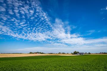 Green Potato field. Rural landscape. Stock photo.