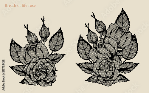 Line Drawing Of Rose Plant : Breath of life rose vector set by hand drawing beautiful flower