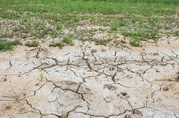 Salt on the soil surface