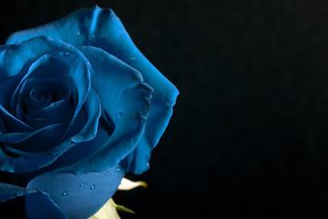 Rose in Blue Wall mural