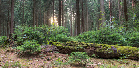 Wald, Totholz