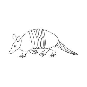 Cingulata animal illustration