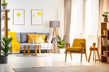 Yellow wooden armchair in bright living room interior with posters above grey sofa. Real photo