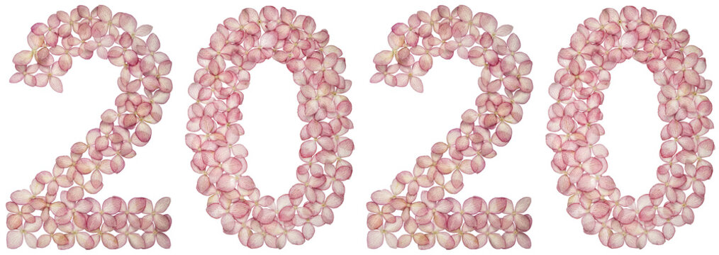 Numeral 2020 from flowers of hydrangea, isolated on white background