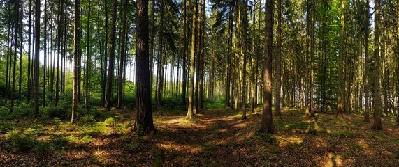 view in the forest panorama with trees