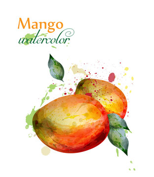 Mango fruit watercolor Vector. Delicious colorful isolated designs