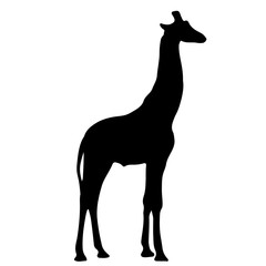 black silhouette of a giraffe. vector illustration