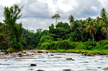 Jungle around the beautiful river, in which elephants are bathed  in the Pinnawala Elephant Orphanage, Sri Lanka.