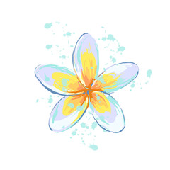 Plumeria flower with splash sketch style hand drawn illustrated element