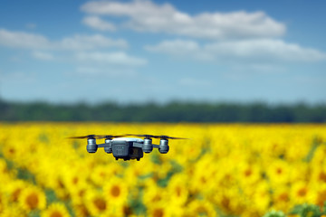 The drone is flying over the sunflower field