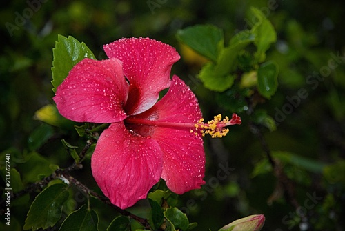 Fleur Nature Red Pink Plant Zanzibar Stock Photo And Royalty Free