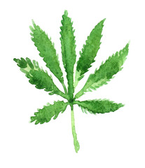 Single bright green hemp leaf painted in watercolor on clean white background