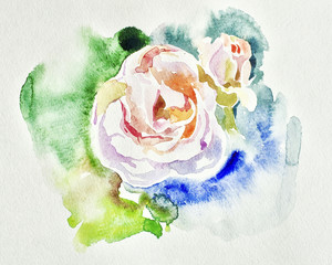 original beautiful watercolor white rose illustration