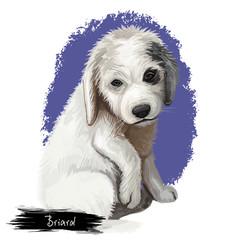 Briard portrait dog breed digital art illustration