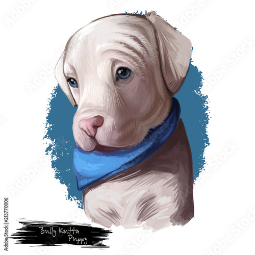 Bully kutta puppy dog breed digital art illustration