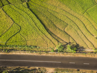 Green rice field aerial photography, Location: Yogyakarta, Indonesia - 15 July 2018