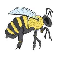 honey bee hand-drawn,vector image,outline style,coloring picture