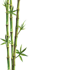 Green bamboo plants on white background