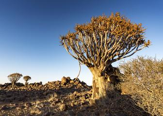 Köcherbäumwald, Namibia