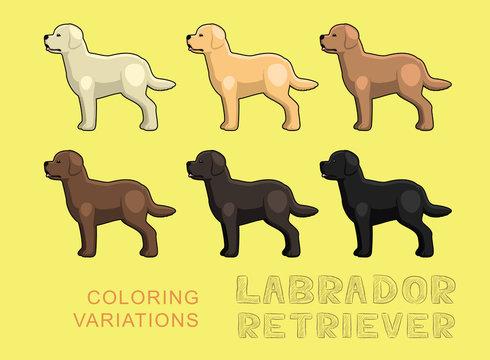 Dog Labrador Retriever Coloring Variations Vector Illustration