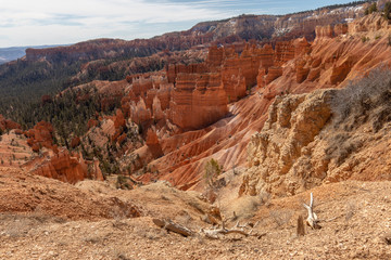 Hoodoos on the Navajo Trail in Bryce Canyon National Park, Utah, USA