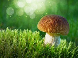 Mushrooms in summer forest