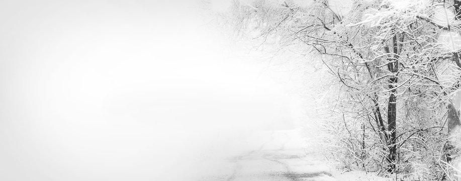 Forest after sleet. Monochrome winter forest landscape.