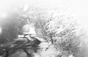Black and white winter landscape. Snowstorm in park.