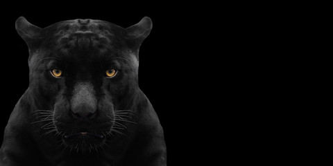 Printed kitchen splashbacks Panther black panther shot close up with black background