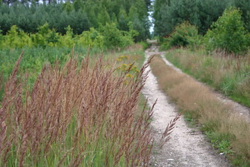 Polna droga przez las, na pierwszym planie wrzosowe trawy, w tle rozmyta gęsta zieleń