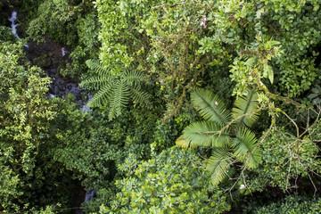 High Angle View Jungle Canopy