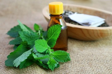 Calming relaxation herb, melissa plant essential oil or other liquid in a dark bottle