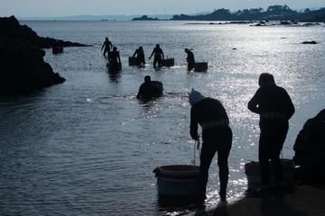 朝日の輝く海へ漁に出る海女