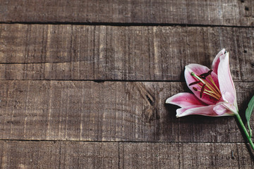 beautiful pink lily flower on rustic wooden background flat lay. gorgeous bloom minimalistic  on rustic wood backdrop. space for text. greeting card. celebration concept. spring image