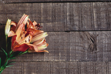 beautiful orange lily flower on rustic wooden background flat lay. gorgeous bloom minimalistic  on rustic wood backdrop. space for text. greeting card. celebration concept. spring image