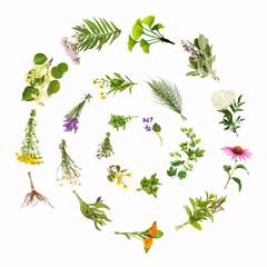 Heilpflanzen, Spirale, Schnecke