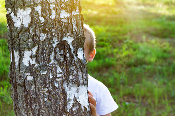 Caucasian boy hiding behind a tree in summer. Child playing hide and seek in the open air