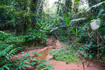 A small river among the impenetrable tropical jungles in the southeast Asia during the day