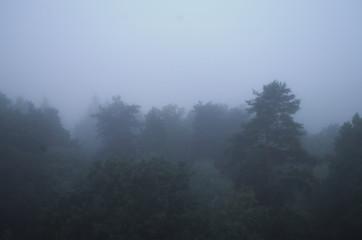 Foggy night, trees