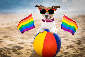 gay dog relaxing on a beach
