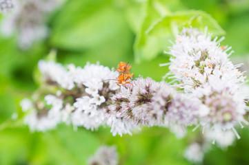 Baraszkujące owady