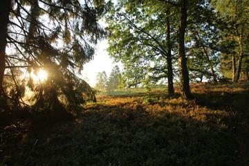 Sonnenaufgang im Morgennebel in der Lüneburger Heide
