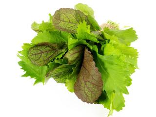 Junger Blattsalat