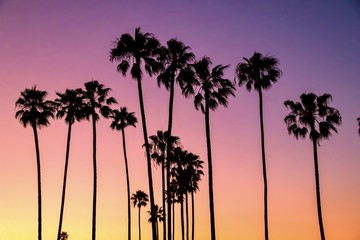 Palm trees with multicolored pastel sky