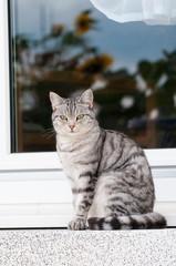 Katze sitzt auf der Terrasse