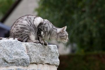 Katze auf einer Mauer