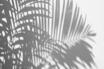 shadow of a palm leaf on white concrete wall