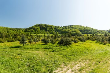 Green spring meadow in mountains