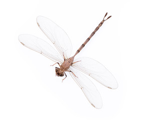 Dragonfly isolated on a white background.